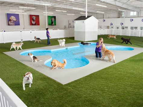 backyard dog pool jfk s 48m animal terminal is cushier than what humans get