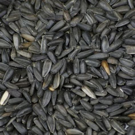 organic sunflower seeds black from real foods buy bulk