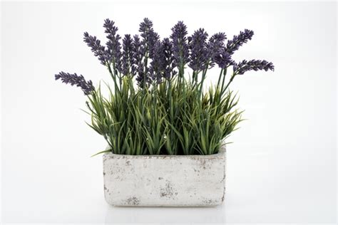 Lavendel Deko Ideen by Lavendel Deko 34 Unglaubliche Ideen