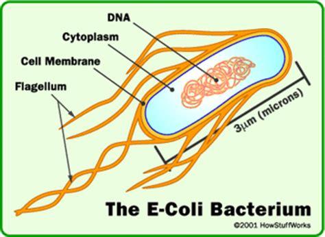 eubacteria exles classification