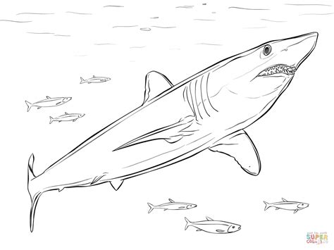 mako templates shortfin mako shark coloring page free printable
