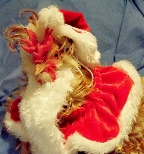 images of christmas roosters 149 best rooster s coop images on pinterest boxes