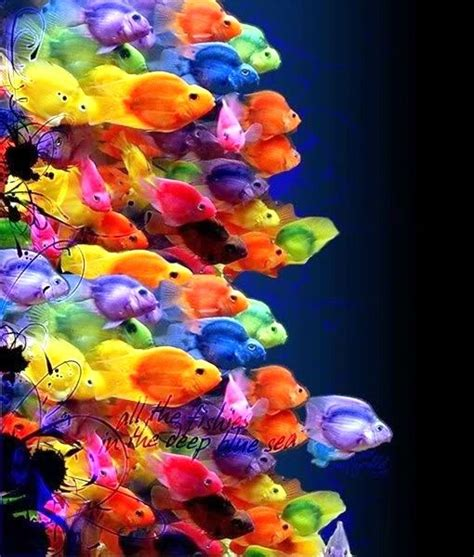 what color are fish 25 best ideas about colorful fish on