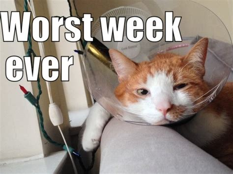 Cone Of Shame Meme - pat the cat post surgery in the cone of shame meme guy