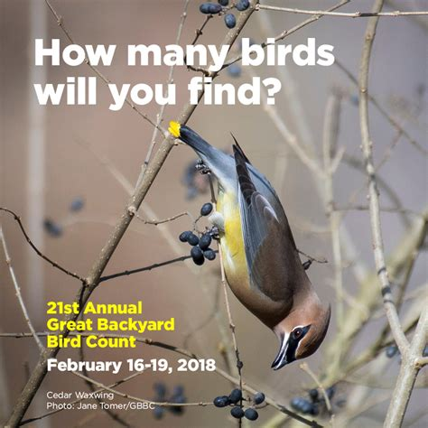 great backyard birdcount radnor bird town radnor is an audubon bird town