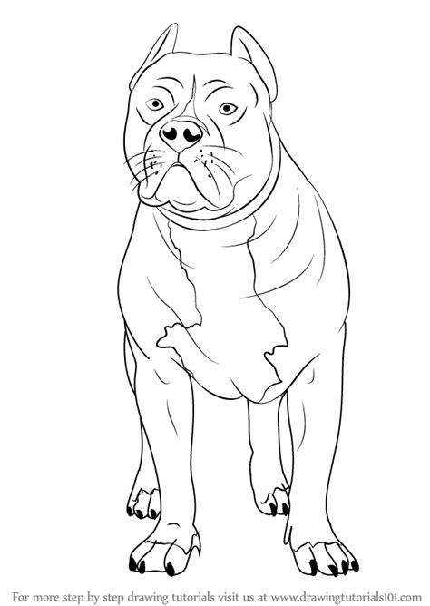 how to a pitbull learn how to draw a pitbull other animals step by step drawing tutorials
