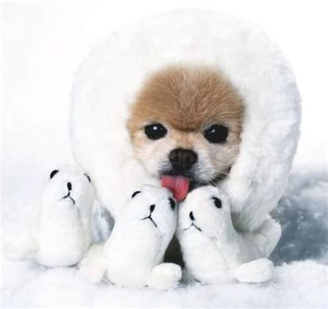 winter puppy winter puppy isn t this puppy with stuffed se flickr