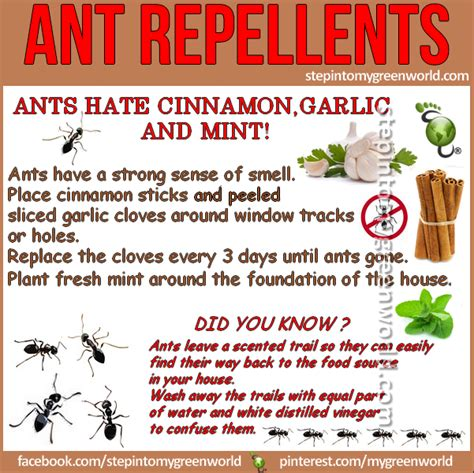 What Repels Ants In The Kitchen by Diy Ant Repellents Step Into Green World Stepin2