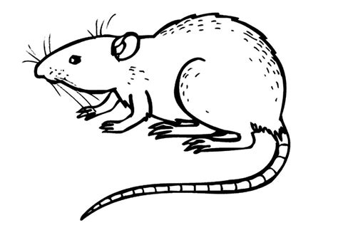 Rat Coloring Page free printable rat coloring pages for