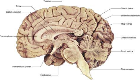 median section of brain ventricular system neupsy key