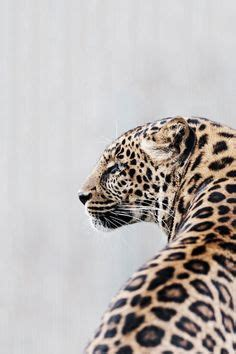 what do you call a baby jaguar 1000 images about cheetah licious d on