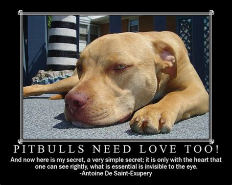 how do you start a in a pit pit bulls help then start pictures of pitbulls