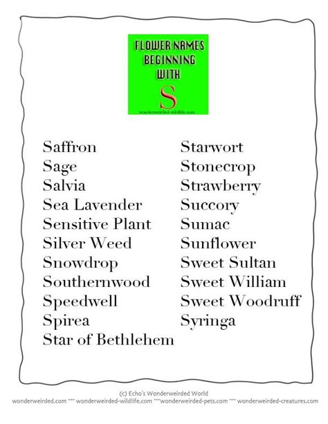 Dictionary Letter Z flower names beginning with s list of common flowers