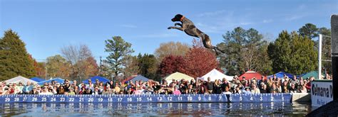 dock dogs addicted to dockdogs the gsp