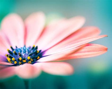 flower photography flower photography nature prints flower floral print daisy