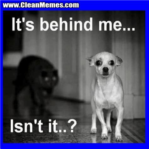 Most Popular Internet Memes - dog vs cat meme clean vs best of the funny meme