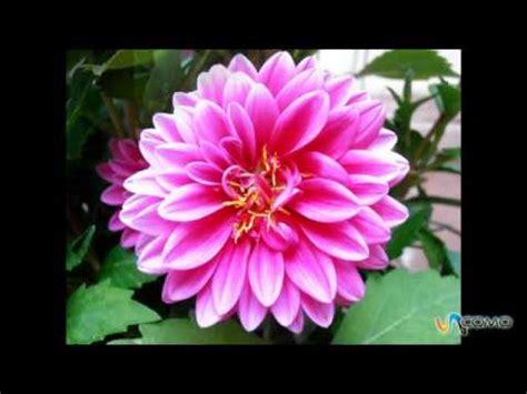 imagenes flores de invierno flores de invierno youtube