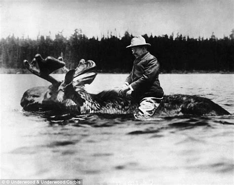 That Famous Photo Of Teddy Roosevelt Riding A Moose Is Fake | famous photo of teddy roosevelt riding a moose revealed to