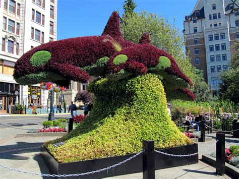 victoria bc floral design studio dolphin shaped topiary downtown victoria british columb