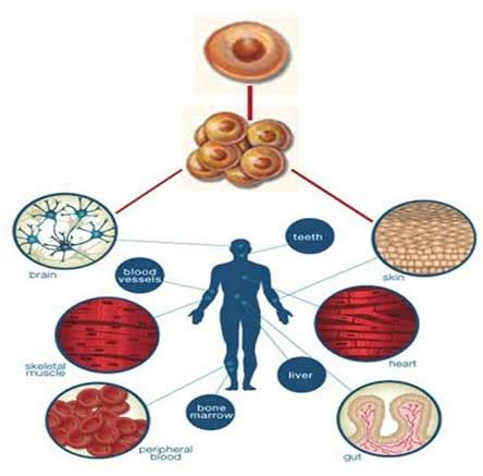 stem cell treatment now stem cell treatment now some alternative safe effective stem cell therapy here now nsi stem cell