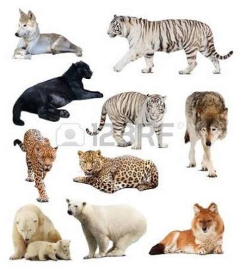 imagenes de animales vertebrados mamiferos mis tareas unadm mamiferos mexicanos en peligro de extincion
