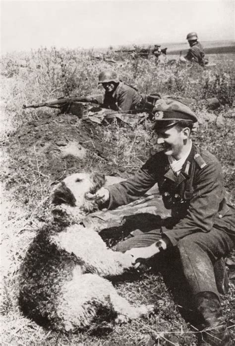 s sky warriors german paratroopers in 1939ã 1945 images of war books 17 best images about dogs of war on dobermans