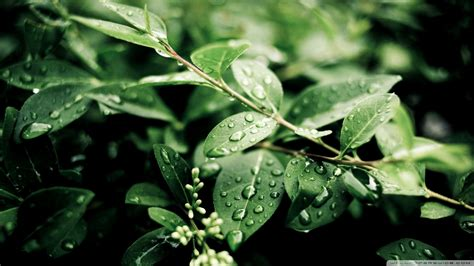 and green foliage plants green plant leaves after wallpaper 1920x1080