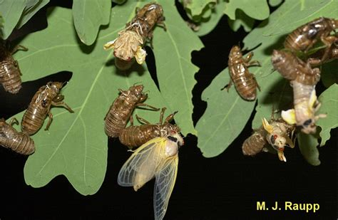 Shedding Of The Exoskeleton by Here Comes Swarmageddon Science News For Students