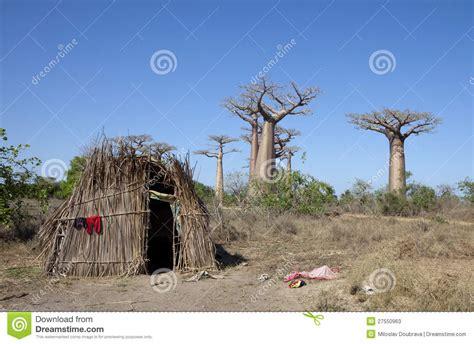 Hutte Primitive by Hutte Africaine Avec Des Baobabs Image Stock Image Du