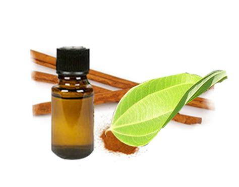 50ml Minyak Kayu Manis Cinnamon Bark Essential Oils 100 buy and organic cinnamon bark essential at