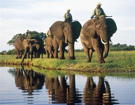 imagenes interesantes de africa delta del okavango botsuana el r 237 o sin mar