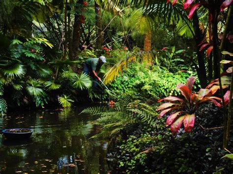 Hawaii Tropical Botanical Garden by Gradener Extrodinaire Working His Magic Picture Of