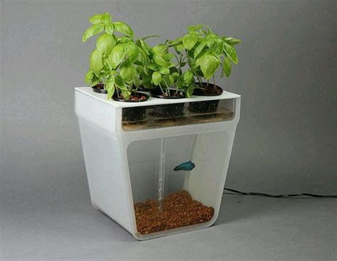self contained garden self contained water garden fish tank set up your fish