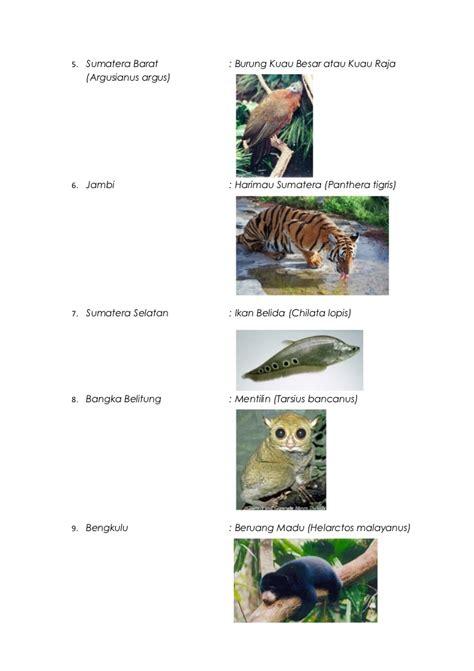 flora dan fauna indonesia flora dan fauna maskot di indonesia