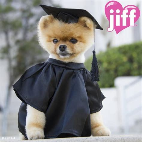 what of is jiffpom jiffpom on quot jiff graduation http t co s7smpbgbb0 quot