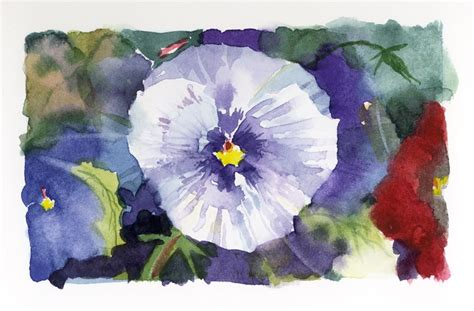 study of flower colours in the garden 2047 best pansies images on