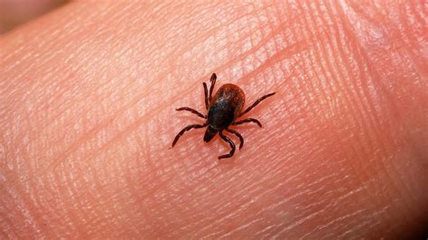 ticks on how about a tick free outdoor experience philadelphia freedom valley ymca