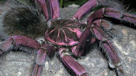 imagenes mas asquerosas del mundo las ara 209 as mas grandes venenosas peligrosas raras y