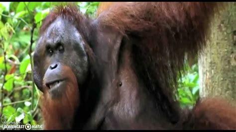 imagenes de animales herbivoros y carnivoros animales carn 237 voros herb 237 voros y omn 237 voros youtube