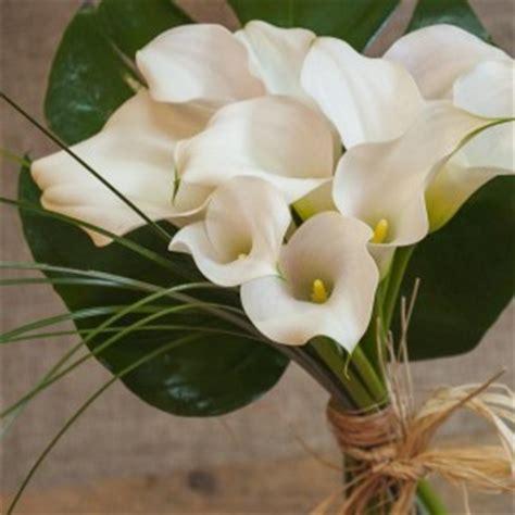 imagenes calas blancas un ramo de calas una flor 250 nica