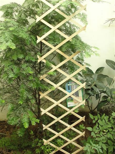 frame for climbing plants wta frame for creeper plant