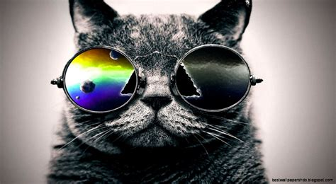 Cool Be Cool cat cool wallpaper best wallpaper hd