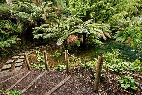 PHOTO: The Jungle at Lost Gardens of Heligan