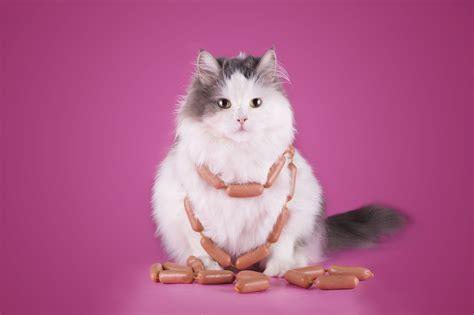 and cat clinic va raffle autos post