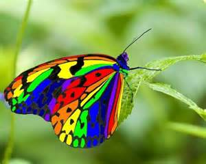 colorful butterfly butterfly wallpaper 1280x1024 40489