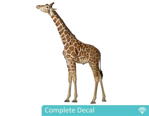 Where To Buy Wall Art Stickers giraffe wall decal your decal shop nz designer wall