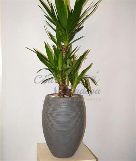 vaso con pianta vaso barcelona cemento con pianta centro fiori