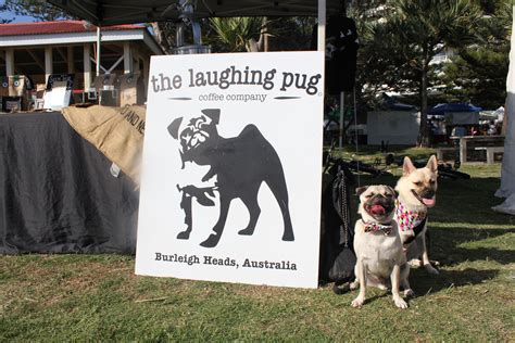 pug puppies gold coast world class coffee the laughing pug coffee company