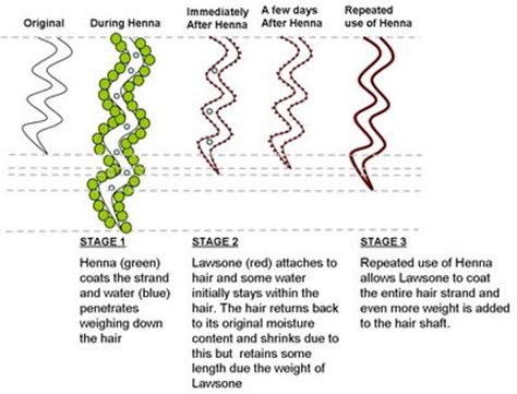 hydration vs moisture the henna curl loosening theory