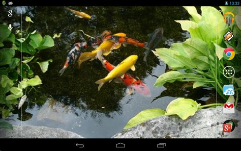 live wallpaper for pc koi magic touch realistic koi live wallpaper android apps